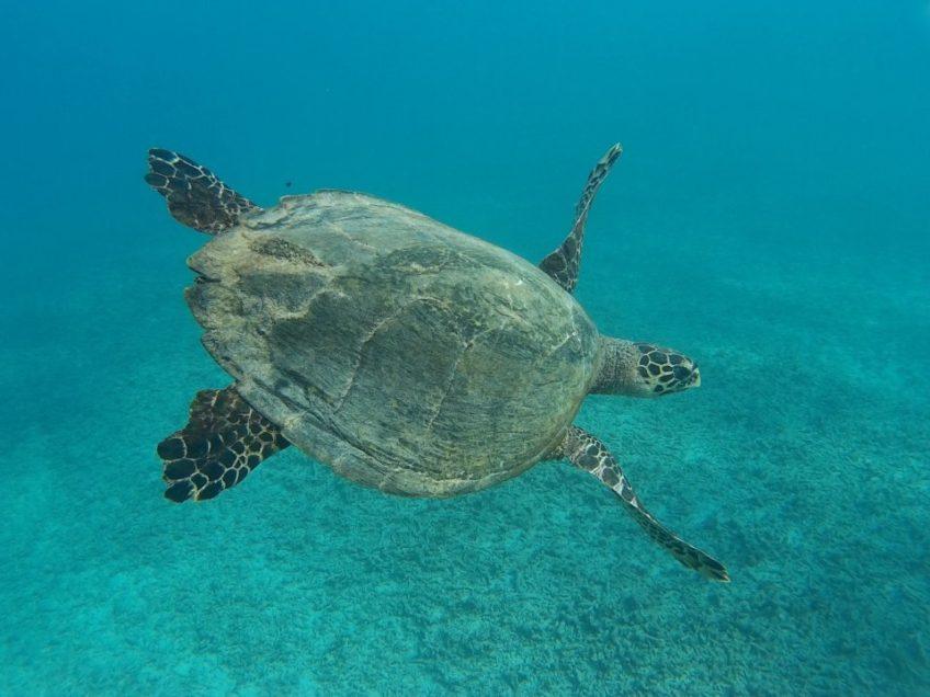Kainráci a Gili Islands – když je najdeš, není co řešit