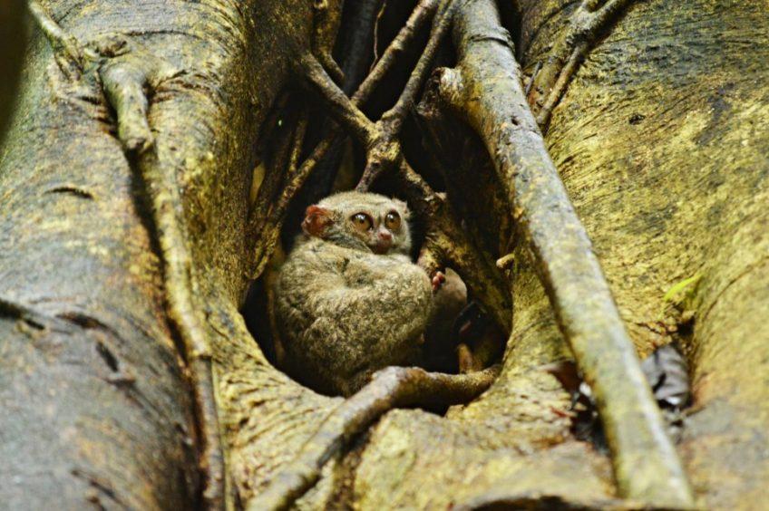 Objevování rozmanité zvířeny v Tangkoko NP