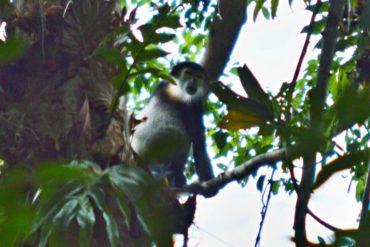Gigantické stromy a fousatí opičáci v Cat Tien NP